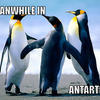 Meanwhile-in-antartica-ed04da