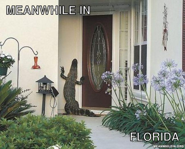 "- Florida?! This should be ""Meanwhile in Africa"""