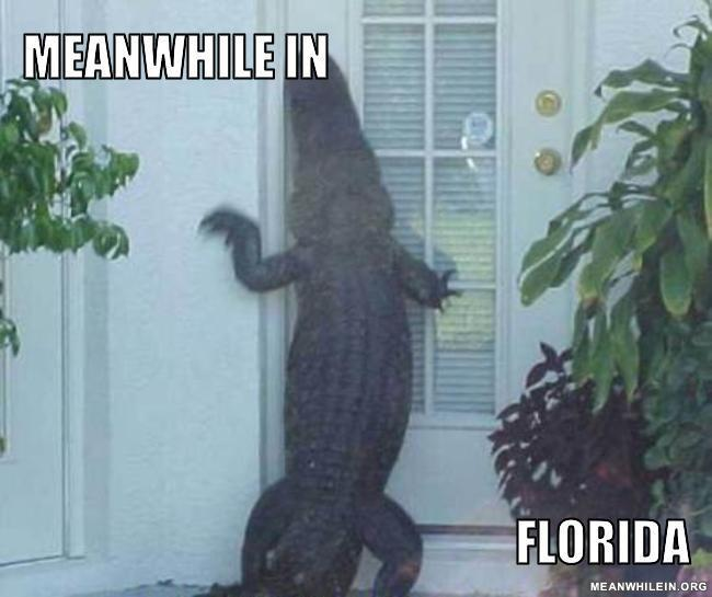 Meanwhile-in-florida-2e1169